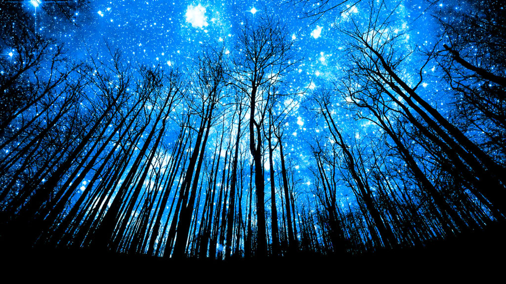 This Image  features a silhouetted forest underneath a sky lit an mystical blue by a billion shining  stars above.